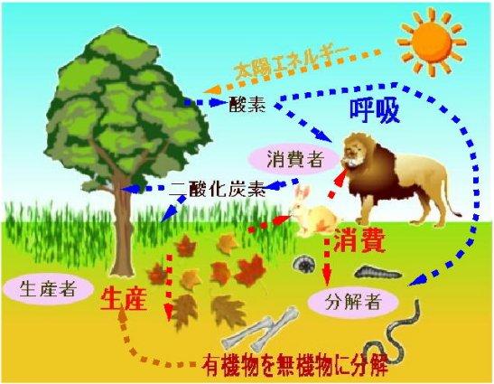 生態系って何? 調べてみよう 自然 生態系って何? 生態系って、何? 川、海